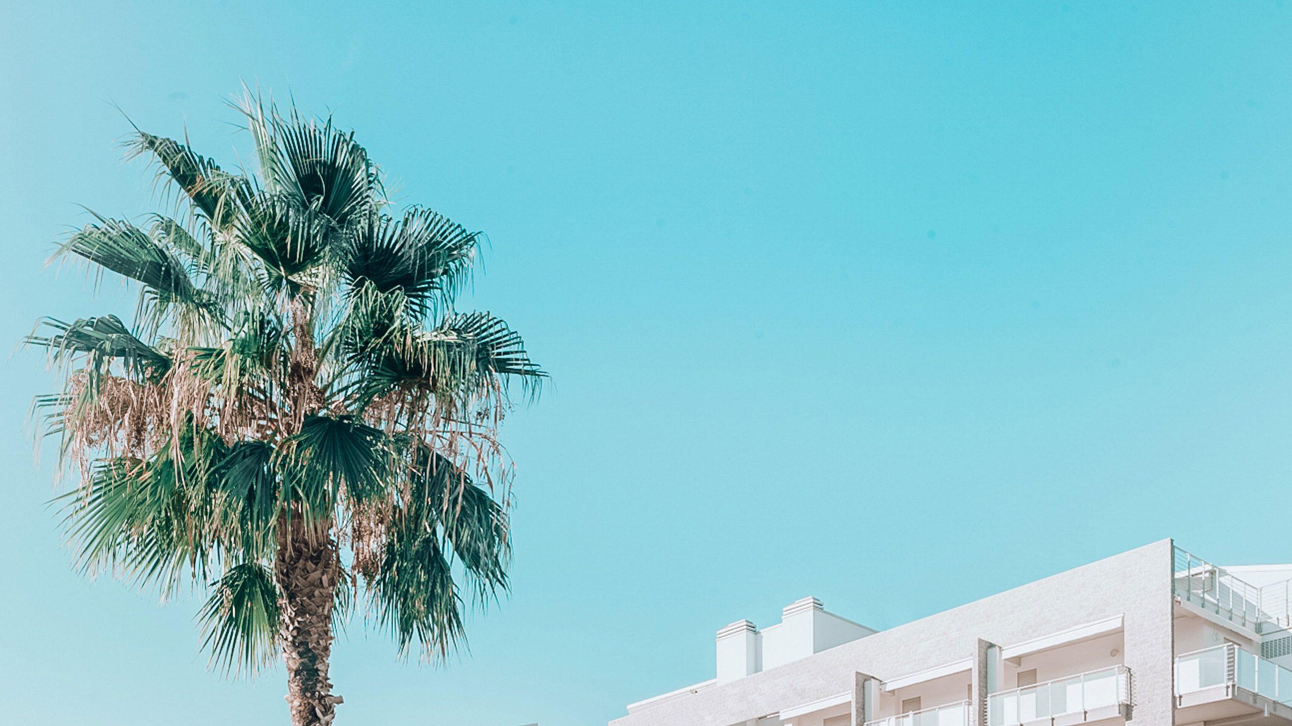 dettaglio-palma-appartamenti-le-dune-silvi-marina