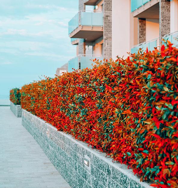 le-dune-silvi-marina-esterni-siepi-decorazioni